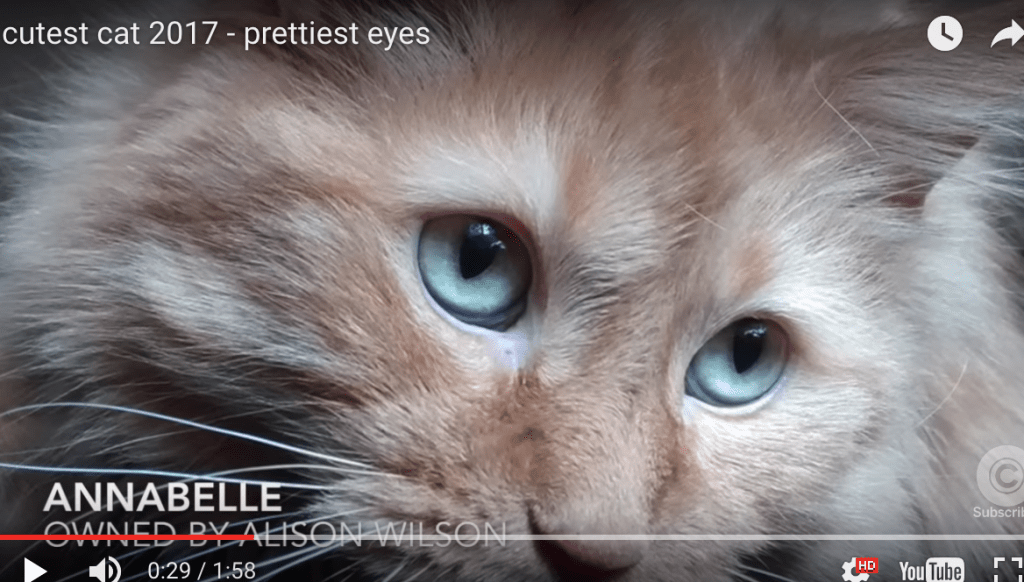 "Cats Vying for ""Prettiest Eyes"" Title Are All Winners"