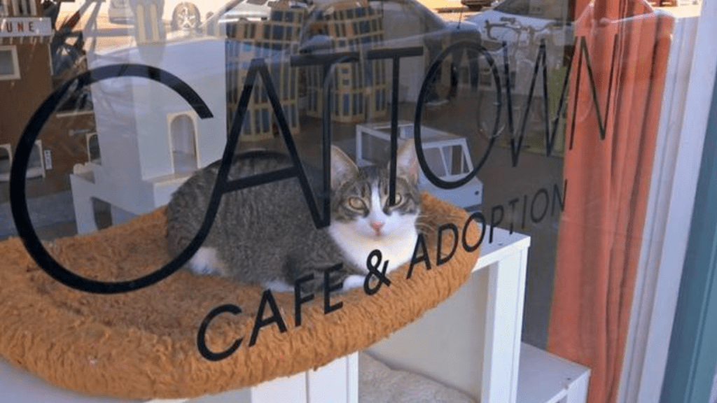 Country's First Cat Cafe Has Saved Hundreds of Lives