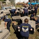 68 Cats Rescued from House in Tennessee