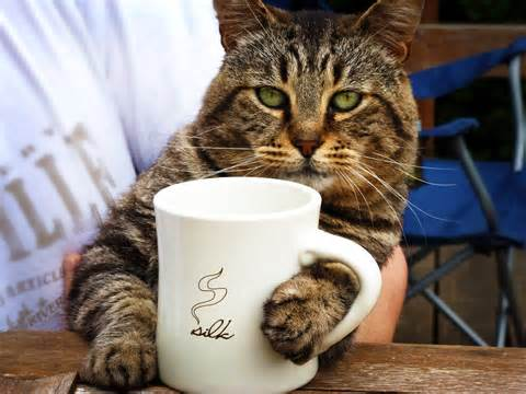 Wake Up and Smell the Coffee, Kitty
