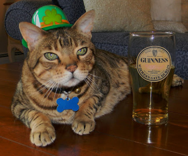Cheers, Kitty? Warning: Imbibing With Your Pet is Not an Option