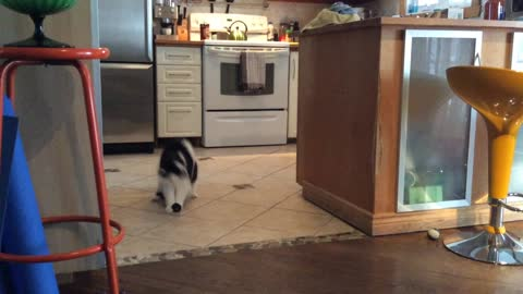 Cat Goes Crazy Over Playing With Ball