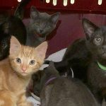 World Watches Live-Streaming Kitten Event