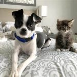 ASPCA: Adoptions are Up, Euthanasia is Down