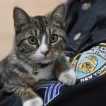 Meet the Friskiest New Officer of the NYPD