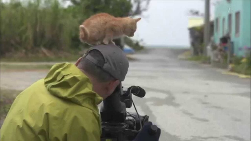 Wait Until You See This Nature Photographer Attacked