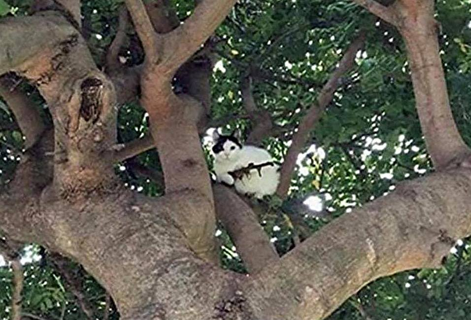 Cat Considered Armed With Lethal Weapon by Police
