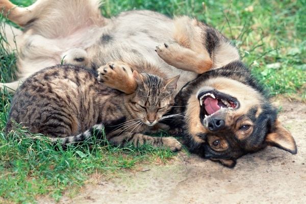 600px0cat-dog-playing
