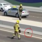 Cat Rescue in Abu Dhabi Goes Viral