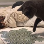 Optical Illusion Proves Entertaining for Everyone, Even Cats