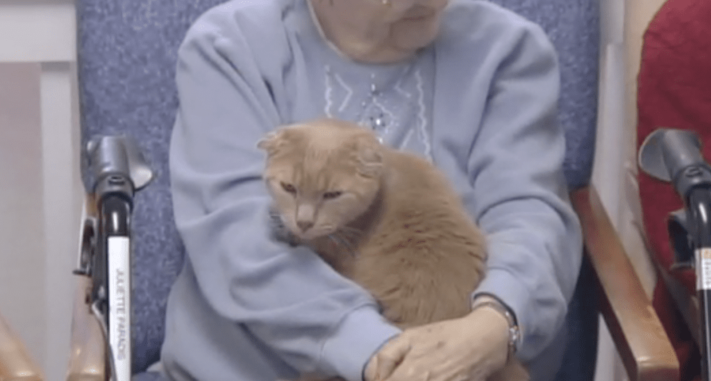Lonely Seniors Love Shelter Cats on Laps