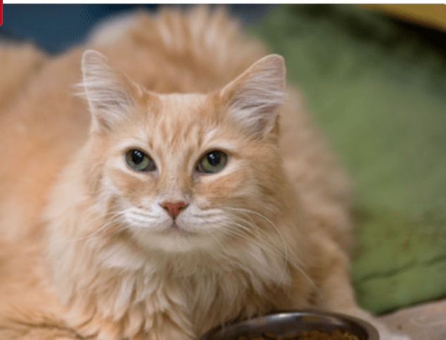 """Handsome Shelter Cat Gets Love Note from """"Admirer"""""""