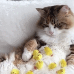Cat Is a Chick Magnet