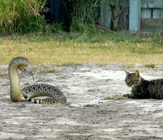 Cat and Rattler Photo Carries Warning