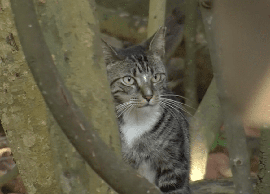 Homes Found for Kitties in Park's Cat Colony