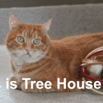 More Than a Shelter: A Safe Haven for Cats Like Johnnie
