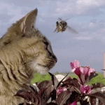 """Cat Knows How to """"Bee"""" One with Nature"""