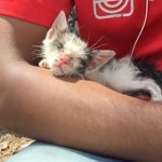 A Found Kitten Finds a Forever Home