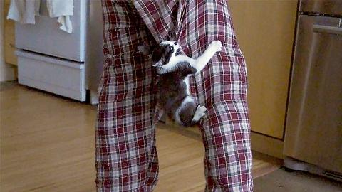 "Cat ""Rescues"" Man From Kitten"