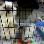 California Considers Bill Requiring Pet Stores to Sell Only Shelter Animals