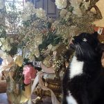 Cat Arranges and (and Eats) Flowers From Vases
