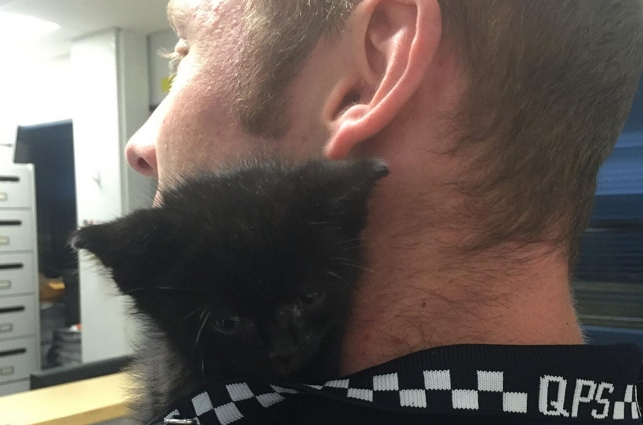 Kitten Charged with Stealing the Hearts of Police Officers