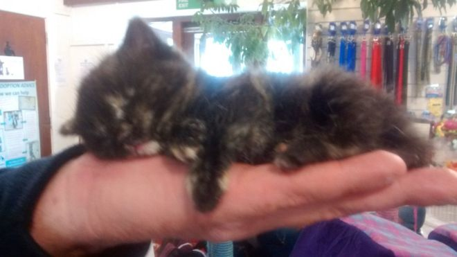 4-Week Old Kitten Fell From Seagull's Grip and Survived