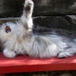 Daily Laugh: Cats With a Flair for the Dramatic