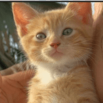 Officer Refuses Eye Witness Report of Kitten Tossed Out Car Window