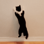 Cat Moves are a Slam Dunk