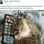 Kitten Thrown from Bridge Has New Life, Facebook Page