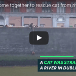 Crowd Cheers As Cat is Hoisted from River
