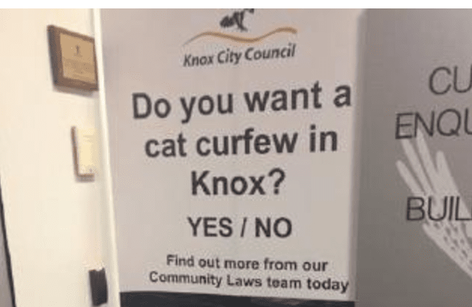 City Considers Curfew for Cats