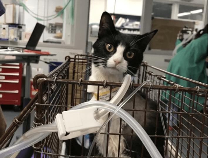 Stray Cat and Tarantula Both Have Delicate Leg Surgery