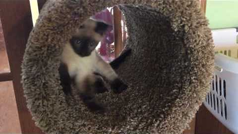 Kitten Goes Wild for New Scratching Post