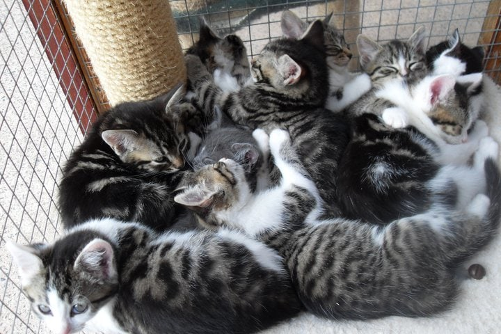 How Cat Owners Can Help Animal Shelters During Kitten Season