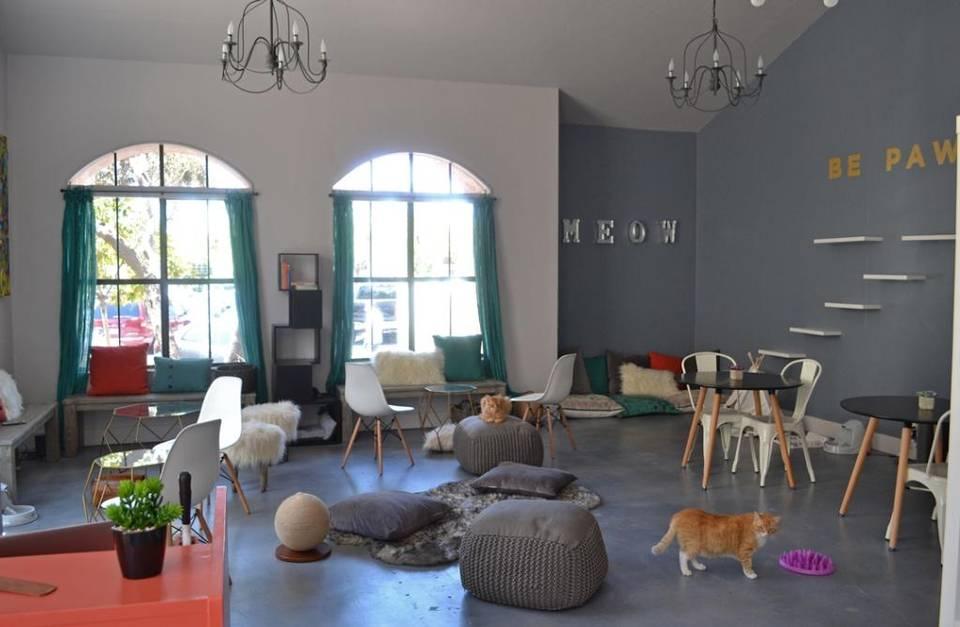Santa Barbara Gets its First Cat Cafe