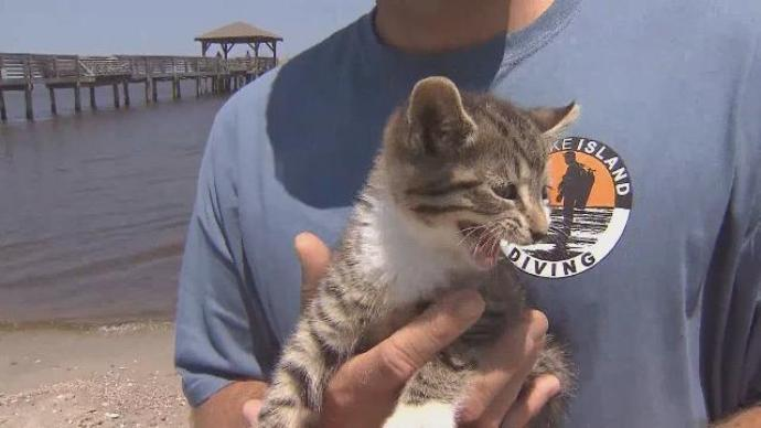 Kitten Saved by NCDOT Crew When Tossed From Vehicle Off Bridge