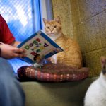 Shelter Program Allows Children to Practice Reading… to Cats