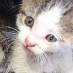 Kitten Abandoned in Pallet Yard Finds Loving Home with Rescuer