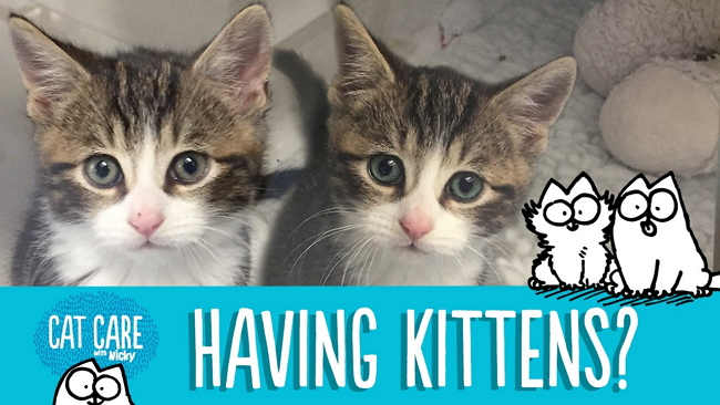 Thinking About a Kitten? Remember ADOPT Don't SHOP