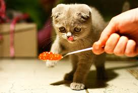 Six Foods You Should Never Give Your Cat