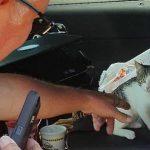Kitten Unwitting Victim in Stolen Car Incident