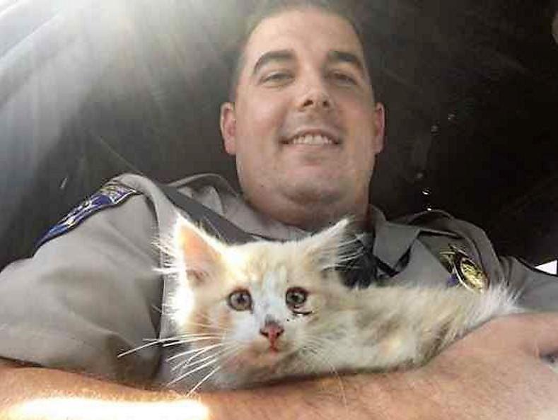 CHP Rescue Kitten off Golden Gate Bridge