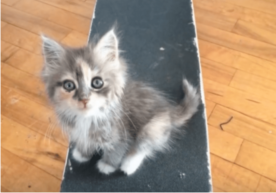 Not So Shy Kitten To Skateboarder: Take Me Home, Please