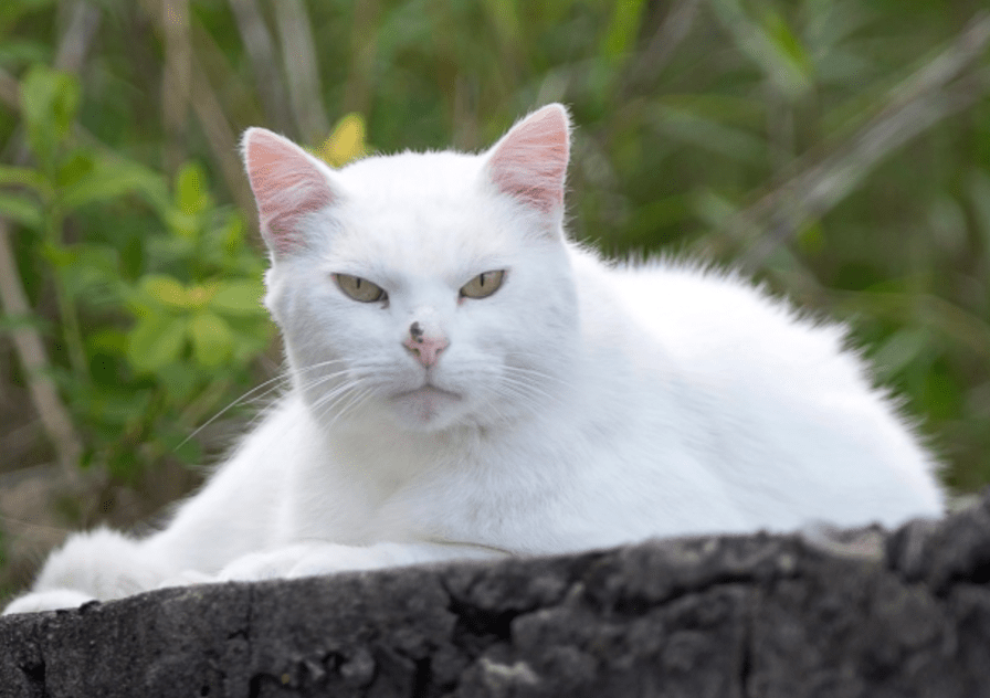 Retired Sailor Cares for Dockyard Cats of Halifax Naval Base