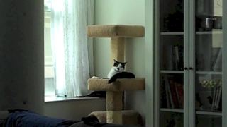 Energetic Cat Will Brighten Your Day