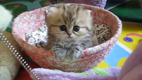 Adorable Kitten in a Basket