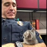 Police Officer Cuddles Kitten All Night Long – Then Adopts Her!