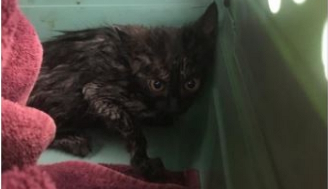 Rescue! Titusville Firefighters Retrieve Kitten From Storm Drain